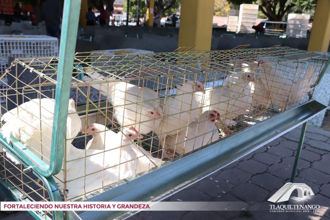Entrega de 118 módulos de gallinas ponedoras
