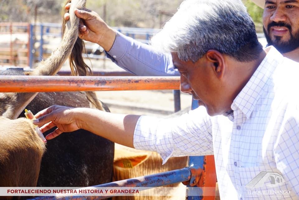 Inicia La Campaña De Prevención De Tuberculosis Y Brucelosis En Ganado Bovino, En Tlaquiltenango